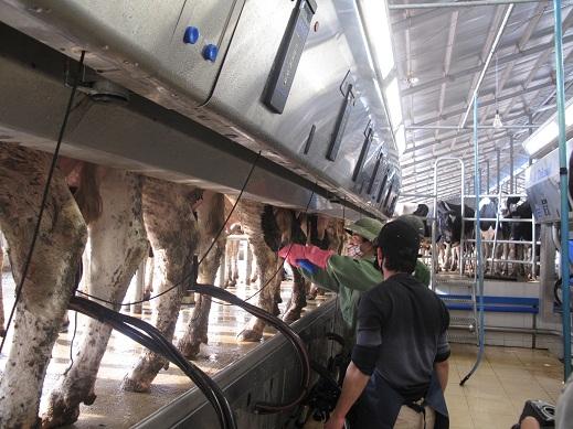 Có doanh nghiệp đầu tư 1 tỷ USD vào chăn nuôi - 1