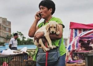 Cảm phục người phụ nữ chi nghìn đô để cứu 100 chú chó