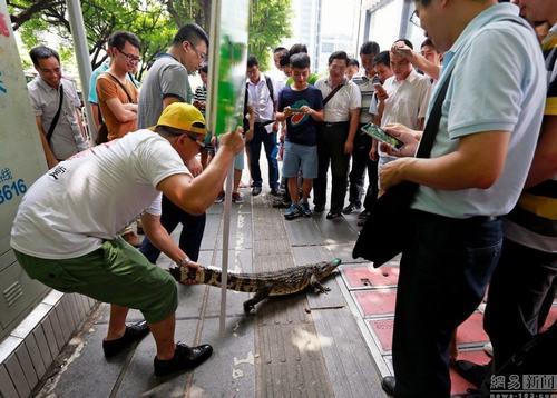 Thưởng 3,2 triệu cho ai dám hôn cá sấu - 2
