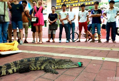 Thưởng 3,2 triệu cho ai dám hôn cá sấu - 1
