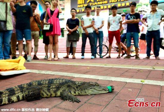 Lạ kỳ công ty tuyển nhân viên dám hôn cá sấu trên phố - 1