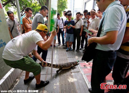 Lạ kỳ công ty tuyển nhân viên dám hôn cá sấu trên phố - 4