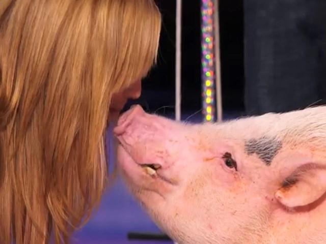 Video: Màn trình diễn ấn tượng của chú lợn thông minh