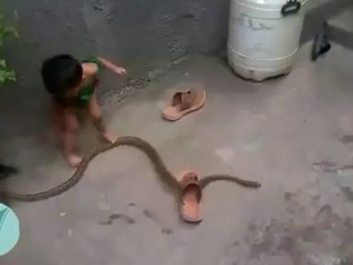 Thót tim xem em bé chơi đùa cùng rắn - 2