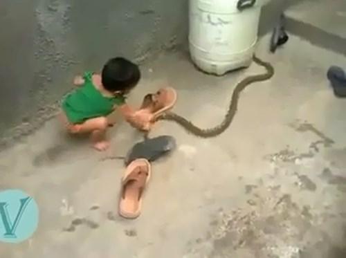 Thót tim xem em bé chơi đùa cùng rắn - 1