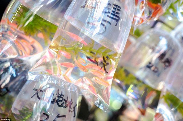 Bên trong chợ cá cảnh lung linh sắc màu ở Hong Kong - 7
