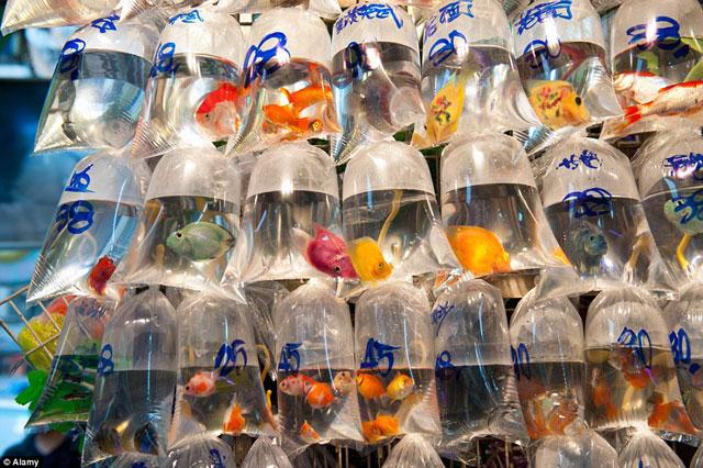 Bên trong chợ cá cảnh lung linh sắc màu ở Hong Kong - 6