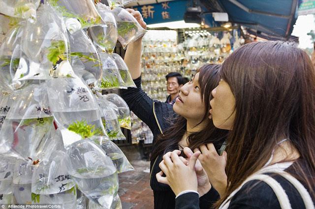 Bên trong chợ cá cảnh lung linh sắc màu ở Hong Kong - 4