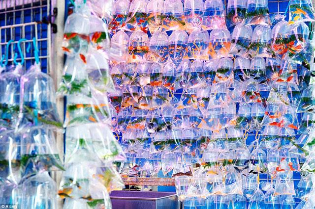 Bên trong chợ cá cảnh lung linh sắc màu ở Hong Kong - 2
