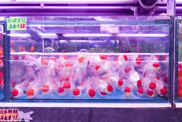 Bên trong chợ cá cảnh lung linh sắc màu ở Hong Kong - 5
