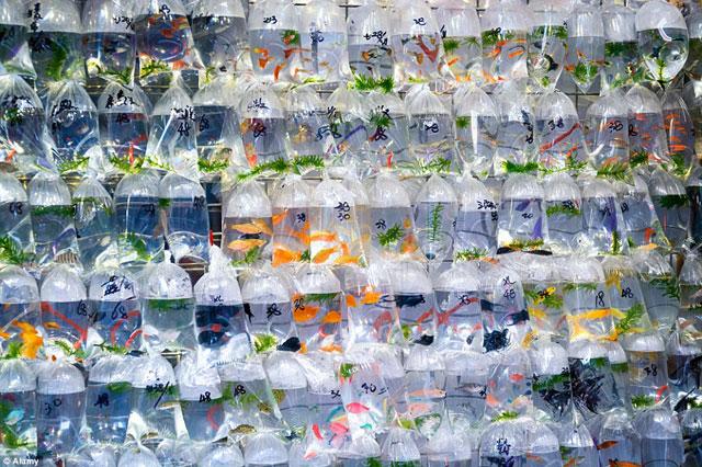 Bên trong chợ cá cảnh lung linh sắc màu ở Hong Kong - 9