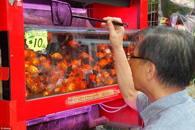 Bên trong chợ cá cảnh lung linh sắc màu ở Hong Kong - 8