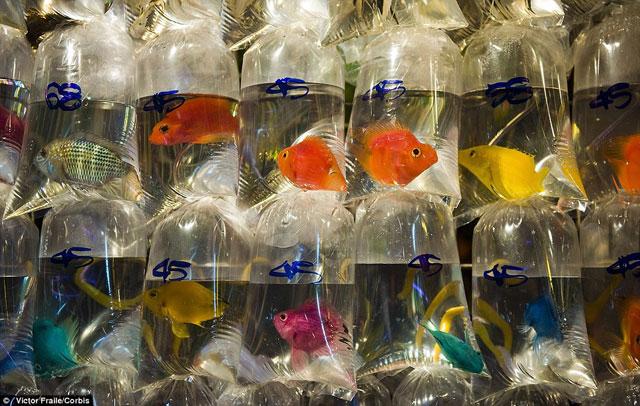 Bên trong chợ cá cảnh lung linh sắc màu ở Hong Kong - 10