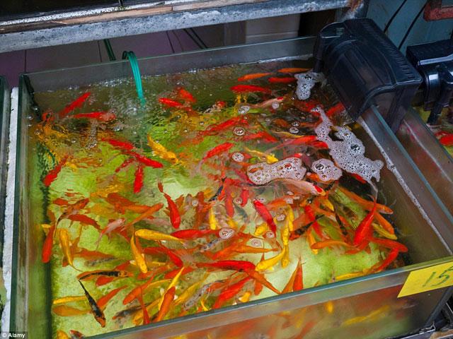 Bên trong chợ cá cảnh lung linh sắc màu ở Hong Kong - 11