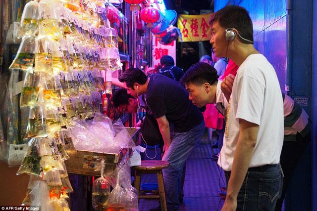 Bên trong chợ cá cảnh lung linh sắc màu ở Hong Kong - 14