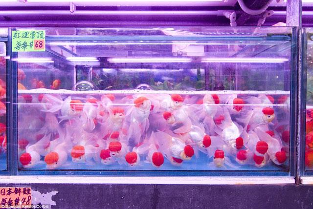 Bên trong chợ cá cảnh lung linh sắc màu ở Hong Kong - 15