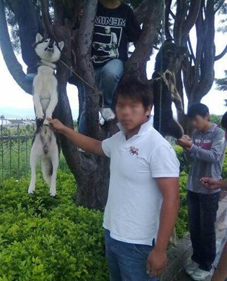 Cô gái đăng ảnh giết chó ăn sinh nhật lên Facebook gây xôn xao dân mạng - 3
