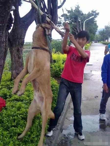 Cô gái đăng ảnh giết chó ăn sinh nhật lên Facebook gây xôn xao dân mạng - 4