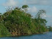 Khám phá đảo Cò xã Chi Lăng Nam - Hải Dương