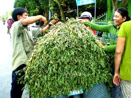 Gỏi tôm rau nhút - món ngon mùa nước nổi - 2