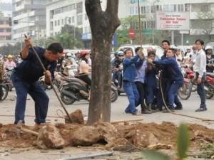 Vụ chặt cây: HN yêu cầu giáng chức, thôi việc nhiều cán bộ