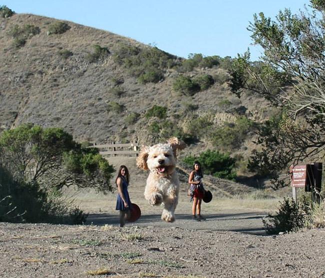 Con người đôi lúc cũng trở nên nhỏ bé trước các chú cún.