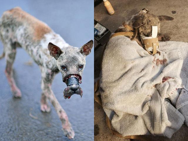 Cứu chó hay cứu người: Tình thương không chỉ dành cho người - 2