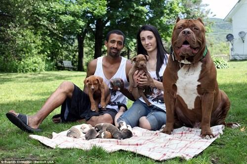 Choáng váng với đàn chó pitbull con giá 10 tỉ đồng - 4