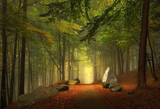 Đường mòn trong rừng ở bang Bavaria, Đức.