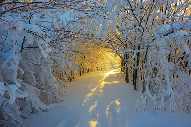 Cảnh bình minh trong một cánh rừng mùa đông ở công viên quốc gia Campigna, Ý.