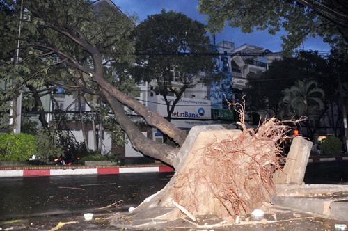 TP.HCM: Mưa lốc, hàng loạt cây bật gốc, ngã đổ - 1