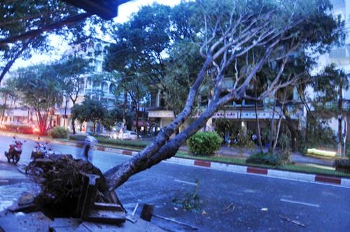 TP.HCM: Mưa lốc, hàng loạt cây bật gốc, ngã đổ - 2
