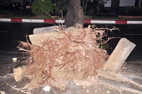 TP.HCM: Mưa lốc, hàng loạt cây bật gốc, ngã đổ - 3