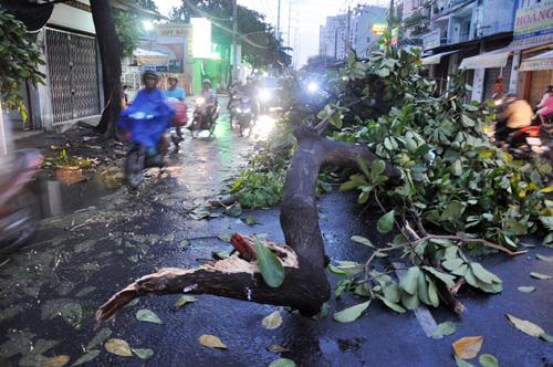 TP.HCM: Mưa lốc, hàng loạt cây bật gốc, ngã đổ - 4