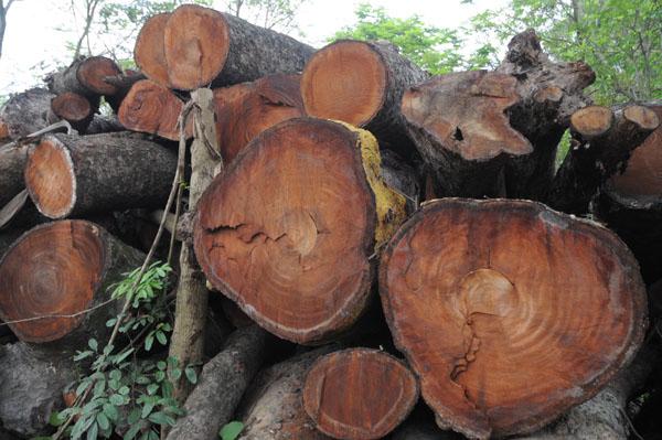 Vân gỗ cây óc cho