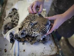 Khám phá xưởng nhồi 6000 xác động vật mỗi năm