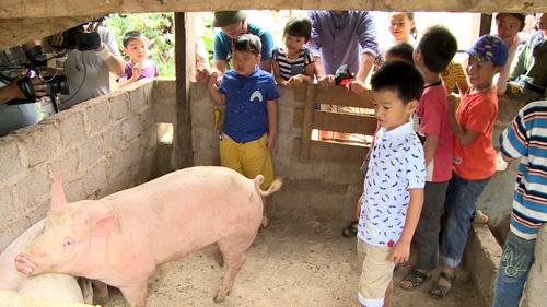 Con trai Xuân Bắc òa khóc khi phải... bắt lợn - 2