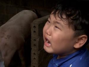 Con trai Xuân Bắc òa khóc khi phải... bắt lợn