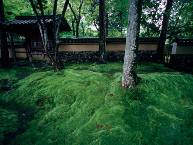 Phụ nữ Nhật rộ mốt ngắm rêu để xả stress - 7
