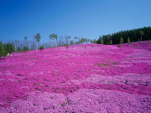 Phụ nữ Nhật rộ mốt ngắm rêu để xả stress - 8