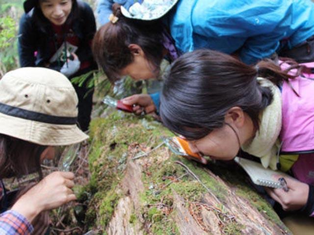 Phụ nữ Nhật rộ mốt ngắm rêu để xả stress - 1