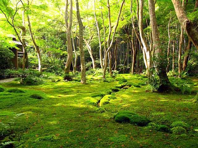 Phụ nữ Nhật rộ mốt ngắm rêu để xả stress - 6