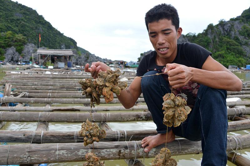 Quảng Ninh: Nước mắt ngư phủ hòa vào biển cả - 2