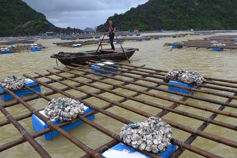 Quảng Ninh: Nước mắt ngư phủ hòa vào biển cả - 1