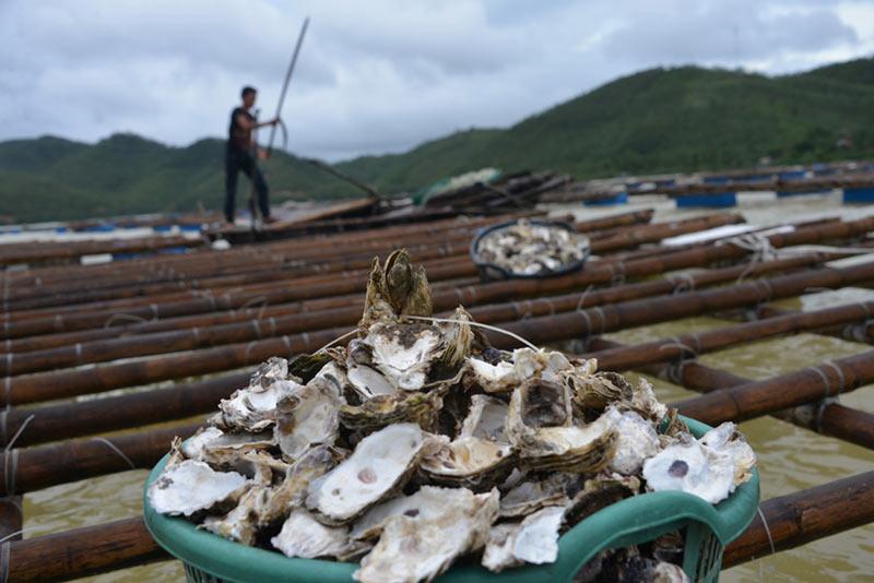 Quảng Ninh: Nước mắt ngư phủ hòa vào biển cả - 5