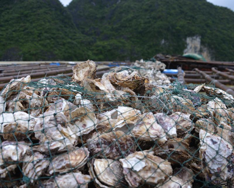 Quảng Ninh: Nước mắt ngư phủ hòa vào biển cả - 6