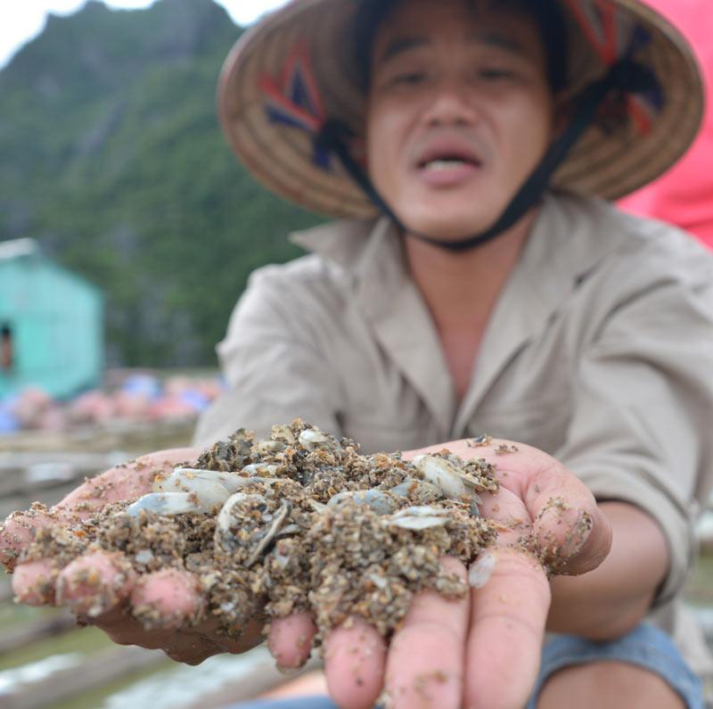 Quảng Ninh: Nước mắt ngư phủ hòa vào biển cả - 8