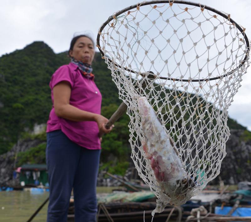 Quảng Ninh: Nước mắt ngư phủ hòa vào biển cả - 9