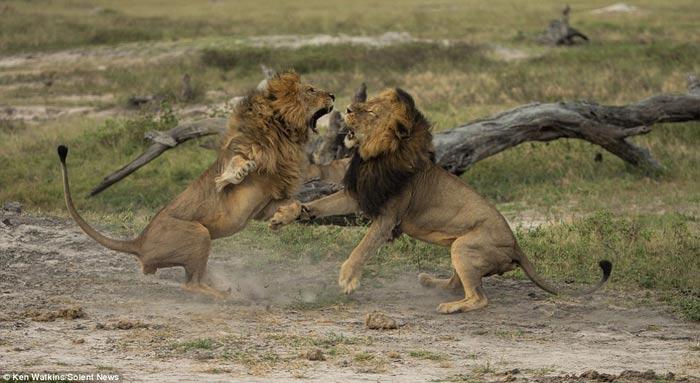 """Thêm một người Mỹ bị bêu tên sau vụ giết """"vua sư tử"""" - 3"""