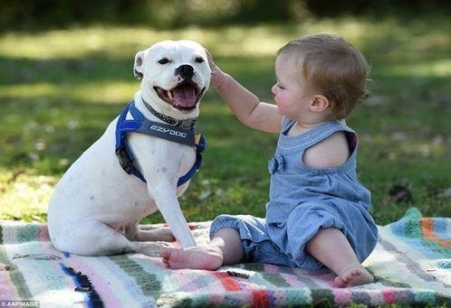 Cảm động tình bạn giữa cô bé cụt tay và chú chó ba chân - 2
